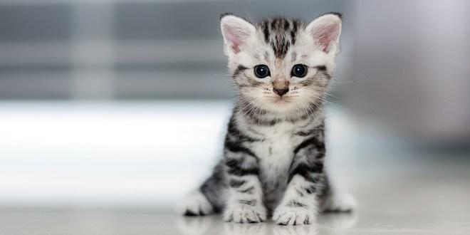 Comment choisir une assurance pour son chat ?