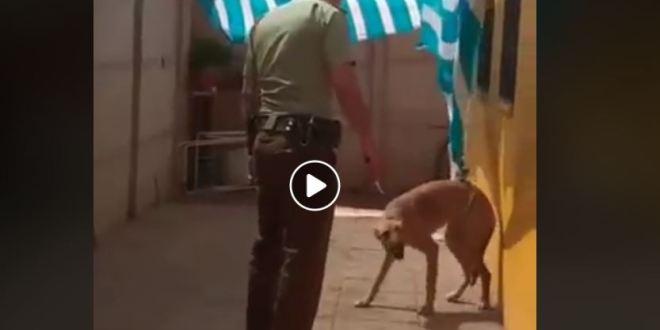 Ce chien remercie son sauveur de la plus belle des façons !