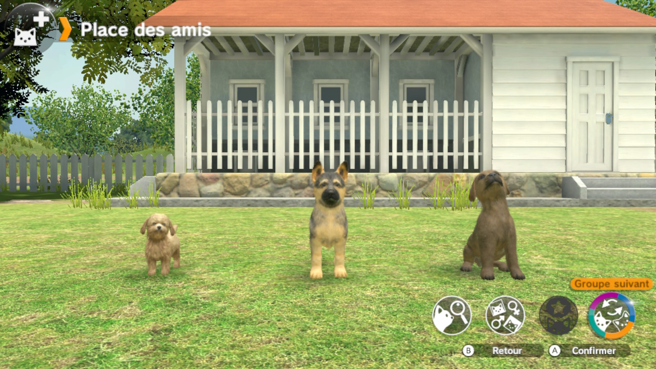 Test Little Friends Dogs Cats Switch Passionageek