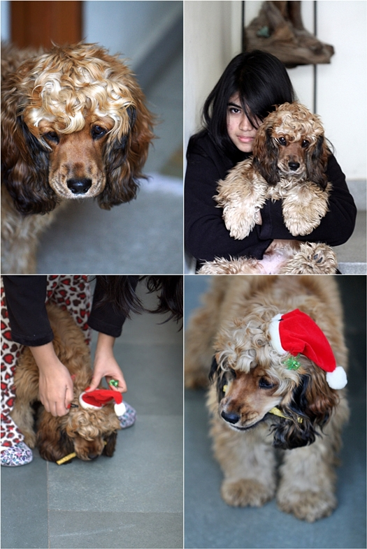 Coco on Christmas