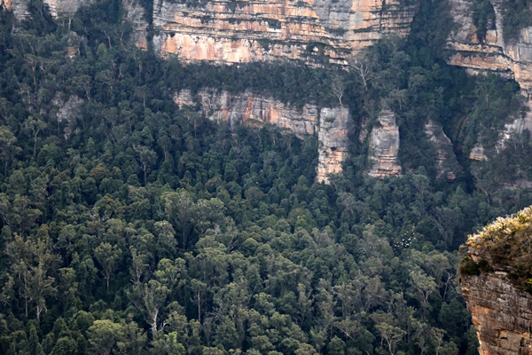 Blue Mountains, Sydney 2015