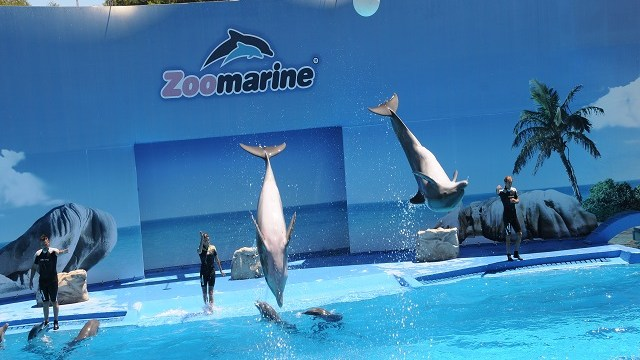 foto_zoomarine