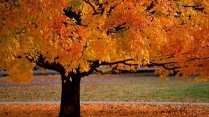 foto_cambio_autunno
