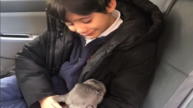 sorpresa cane