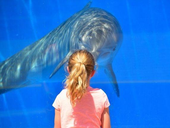 delfino in acquario