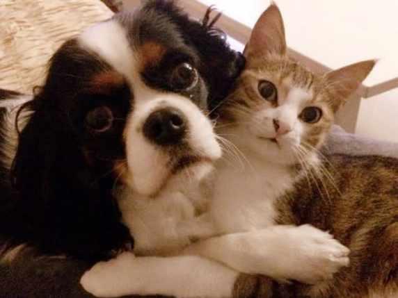 foto cane e gattino