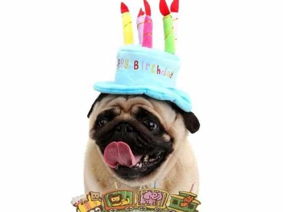foto immagini buon compleanno divertenti 9