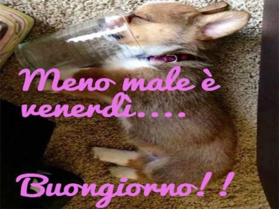 Buon Venerdì Immagini Divertenti E Con Frasi Passione Mamma