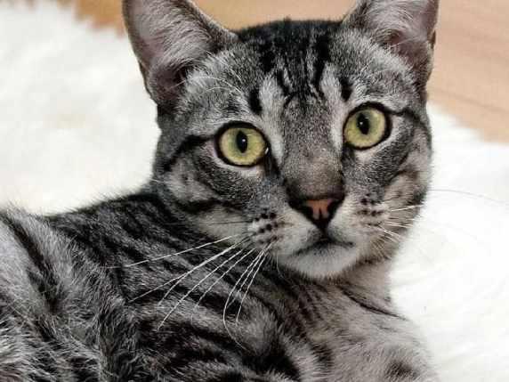 Foto immagini animali gatti
