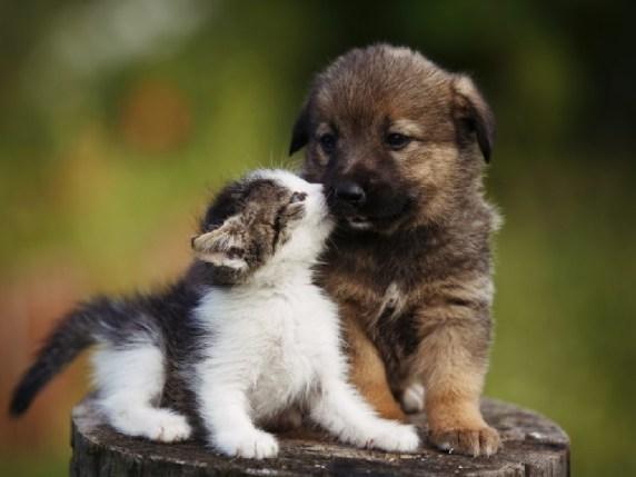 Foto immagini animali cuccioli