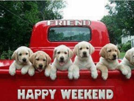 foto immagini spiritose weekend cani