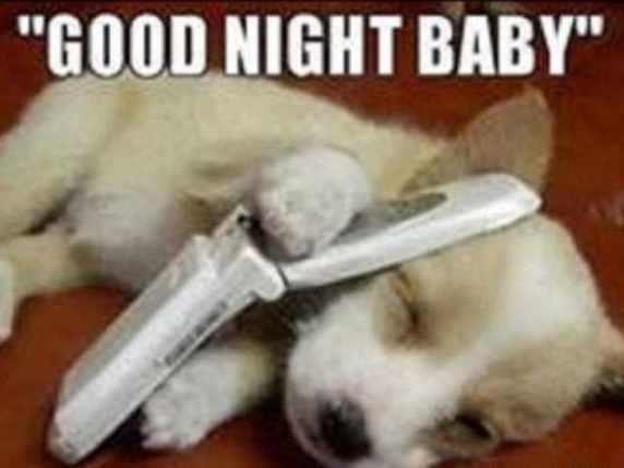 foto immagini spiritose buonanotte cane