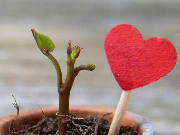 foto citazioni d'amore aforismi