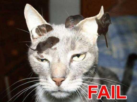 foto divertentissime gatto