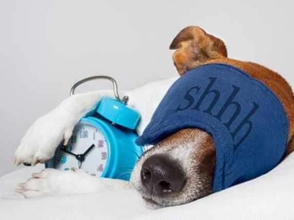 immagini belle buonanotte cane addormentato
