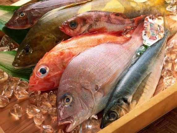 Foto pesci