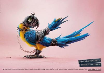 Foundation Tier im Recht - 3D Animals parrot_0