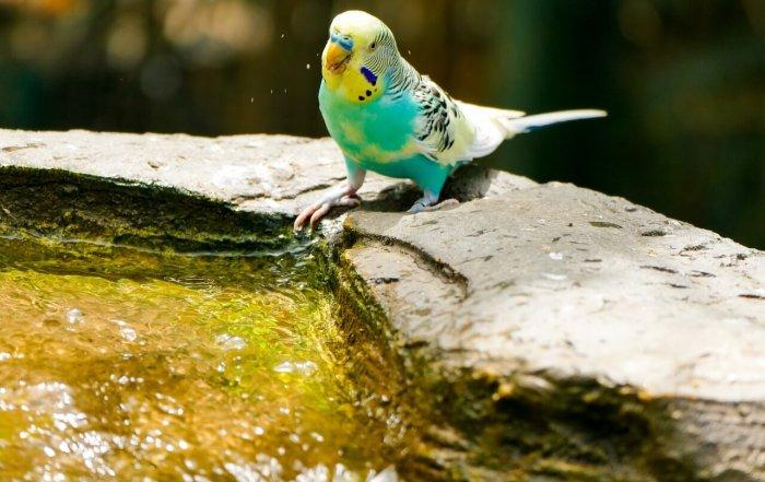 Igiene pappagallo