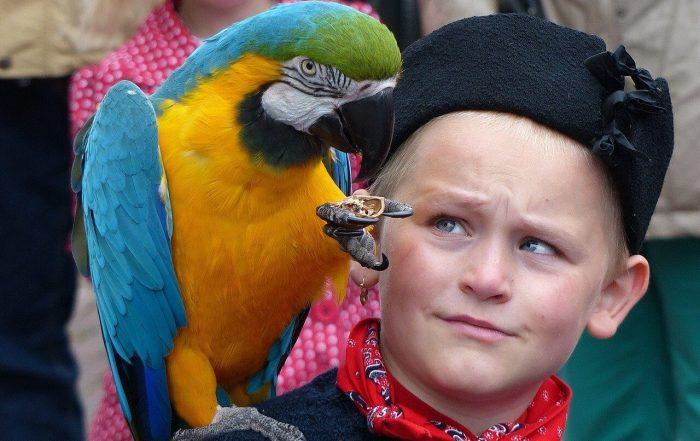 addomesticare un pappagallo
