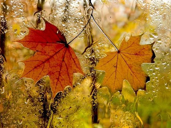 Для тех , кто любит осень , дождь , стихи