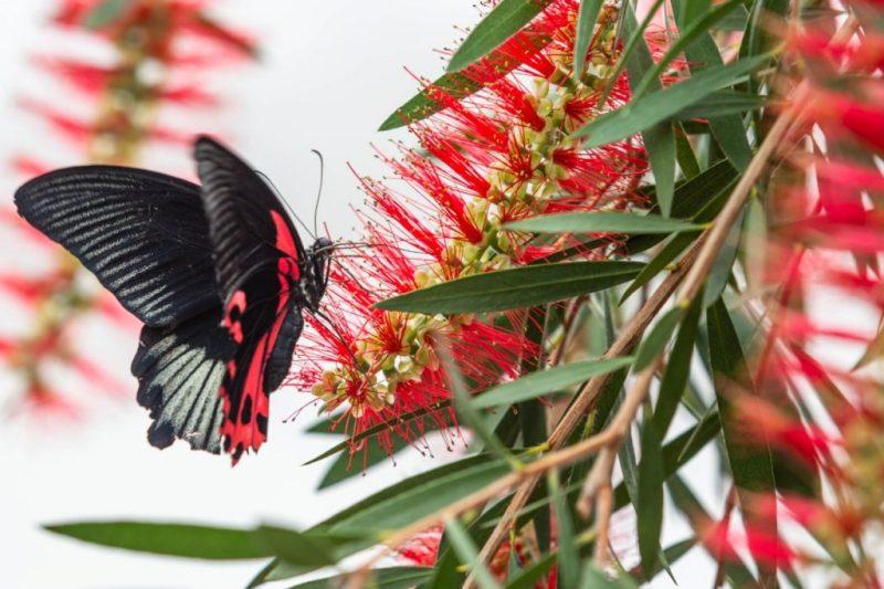 Papillons-en-liberte-a-montreal-1
