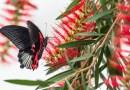Papillons en liberté à Montréal : une expérience féérique pour toute la famille
