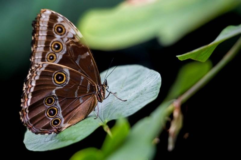 Papillons-en-liberte-a-montreal-9