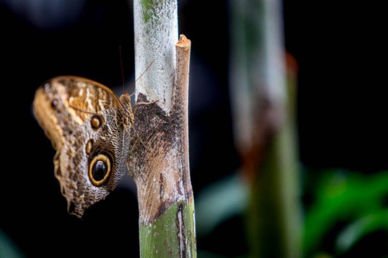 Papillons-en-liberte-a-montreal-yannick-legare-2