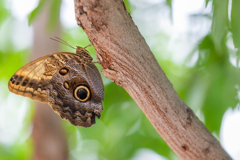 Papillons-en-liberte-a-montreal