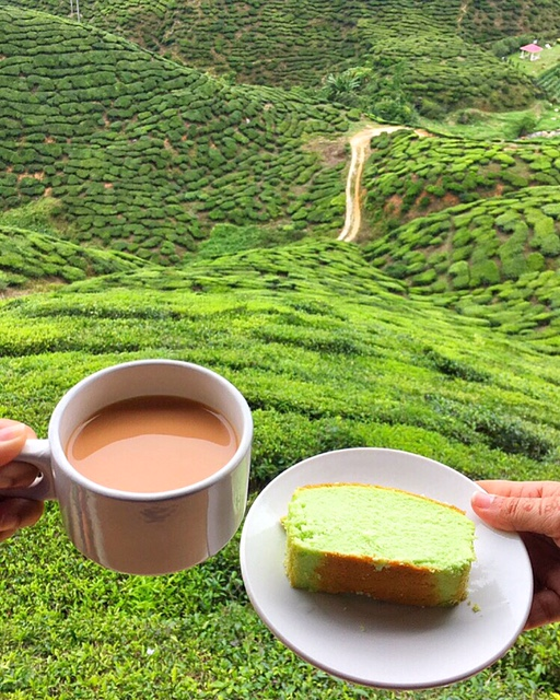 What You Should Know If You're Going To Cameron Highlands