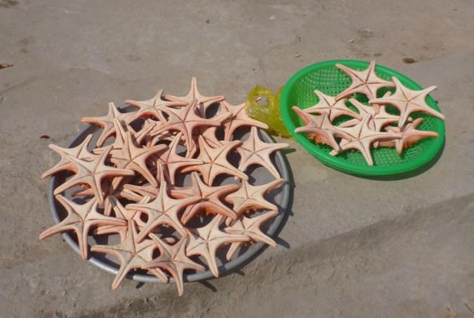 14 starfish