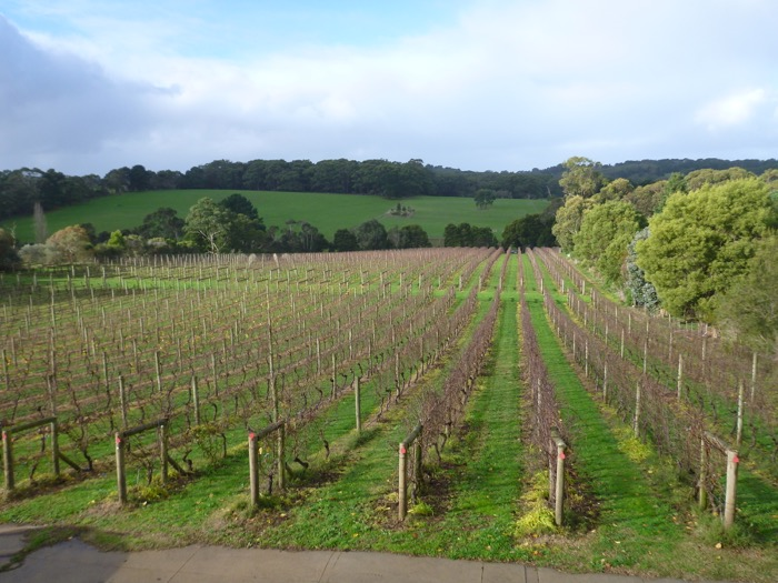 Touring Australia's Wine Regions: Hunter Valley, Mornington Peninsula and Yarra Valley