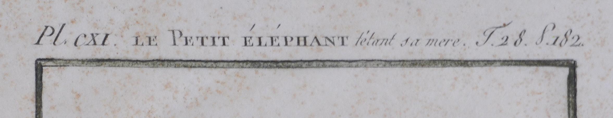 1808 The Little Elephant Antique Print From Buffon