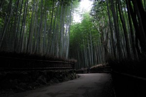 Bamboo Grove at dusk