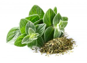 Oregano is not only used as a medicinal but also as a spice plant.