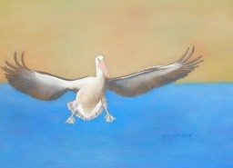 Judy Hollinshead - Pelican Coming