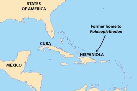 dominican republic location on the caribbean map » ..:: Edi Maps ...