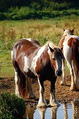 HorseAtWater