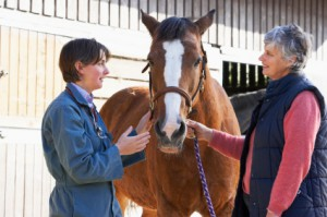 horse-veterinarian-300x199