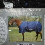 horse blanket winter