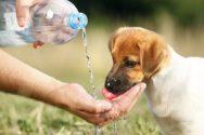 heat stroke in pets