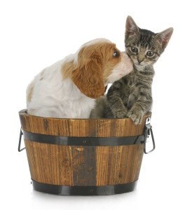 cute puppy and kitten sitting in wooden bucket on white background