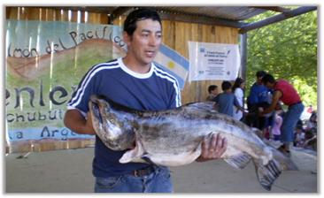 salmon ganador, carrenleufu