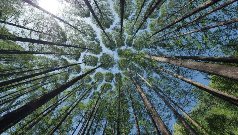Bosque Día de la Tierra
