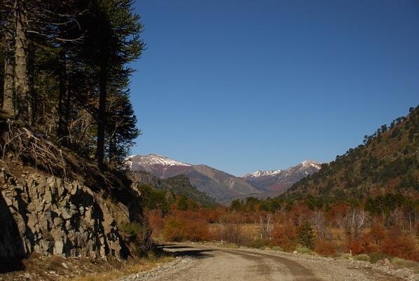Rutas Patagonia: ruta del Pehuén