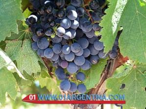 patagonia-0003
