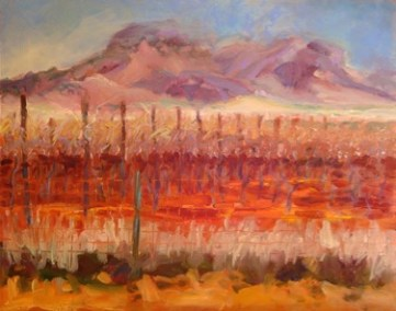 Arizona Vineyard