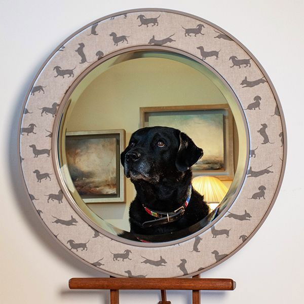 The Angus Mirror with a reflection of Max the Labrador