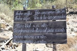 El Pino Gordo y el Pino de Las Dos Pernadas en Vilaflor