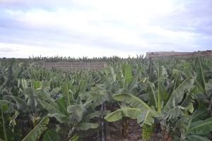 El Charco del Viento en La Guancha